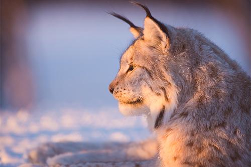 Lynx | Praktijk voor begeleiding bij HSP
