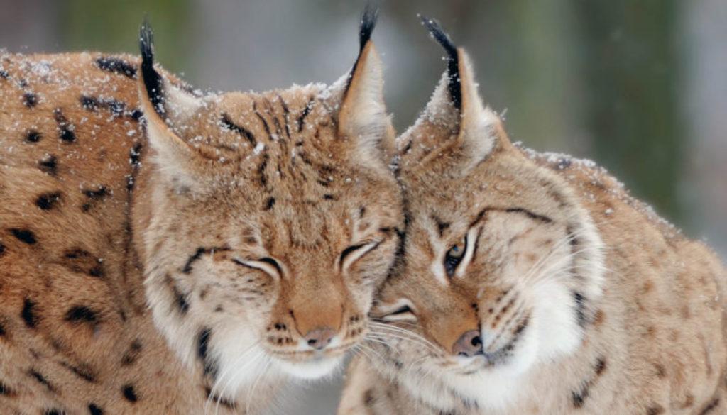 Begeleiding bij hoogsensitiviteit   Lynx   Amersfoort