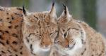 Begeleiding bij hoogsensitiviteit | Lynx | Amersfoort